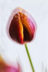 2020_01_23- KTW_macro-flowers_045