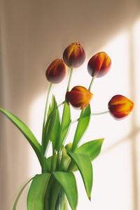 2020_01_23- KTW_macro-flowers_037-bw_03 copy