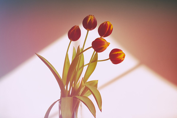 2020_01_23- KTW_macro-flowers_006