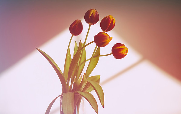 2020_01_23- KTW_macro-flowers_006 copy