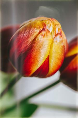 2020_01_23- KTW_macro-flowers_080_02