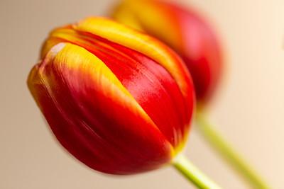 2020_01_23- KTW_macro-flowers_058_03