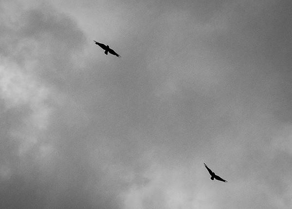 20141118- KTW__heathwalk-108
