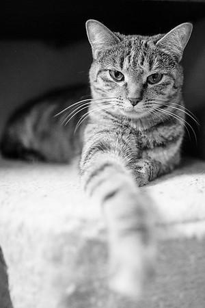 20131019-cat-Edit