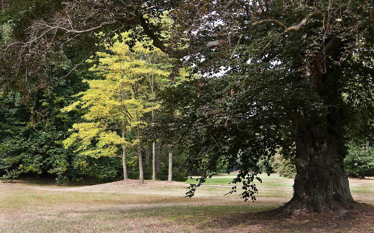 Branitz, Im Süden des Mittelparks