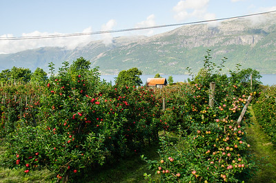 Apfelplantage  von Thorsten