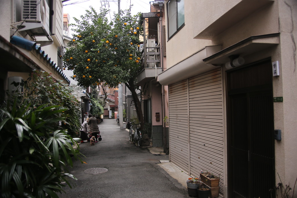 A Ponkan tree forms a natural arch over one of dozens of Nakazakicho's alleys