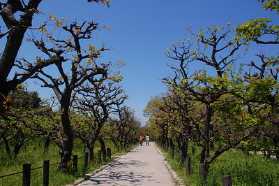 Plum grove at Osaka Castle