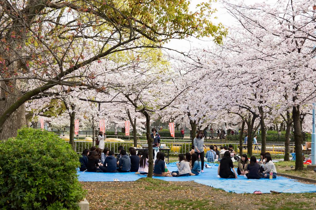 Hanami at Kema Sakuranomiya-koen Park.