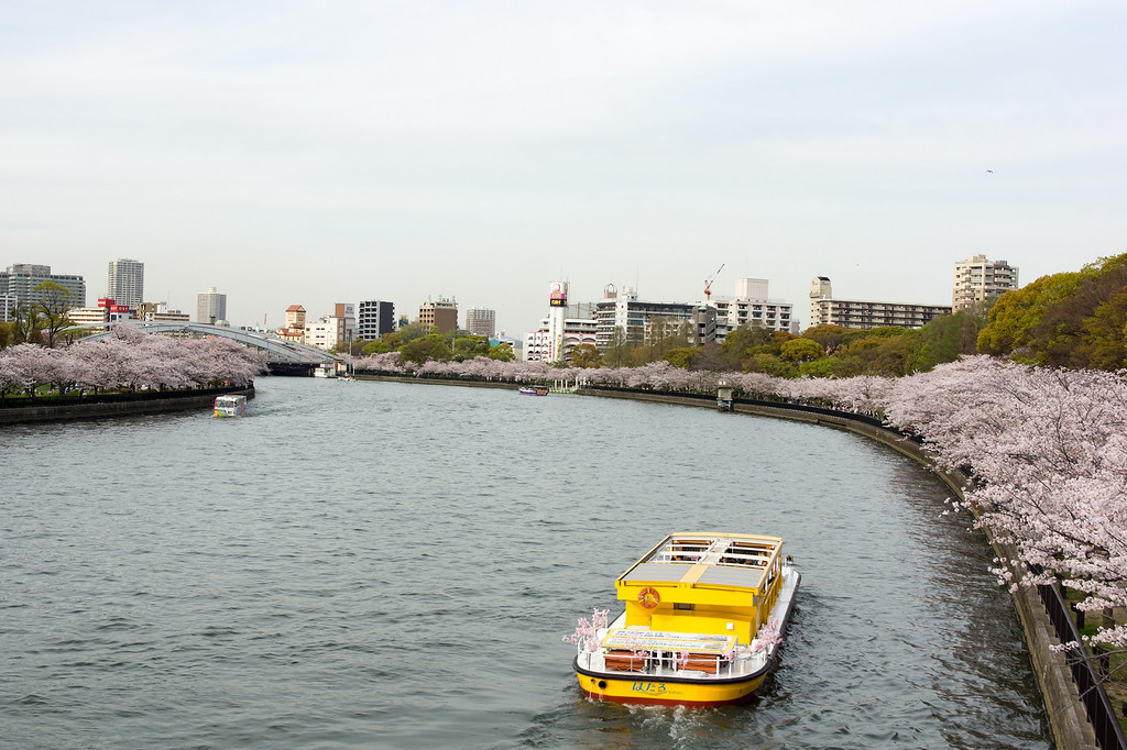 The sakura-lined Okawa River.