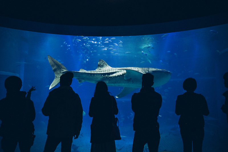 Whale shark at Osaka Aquarium
