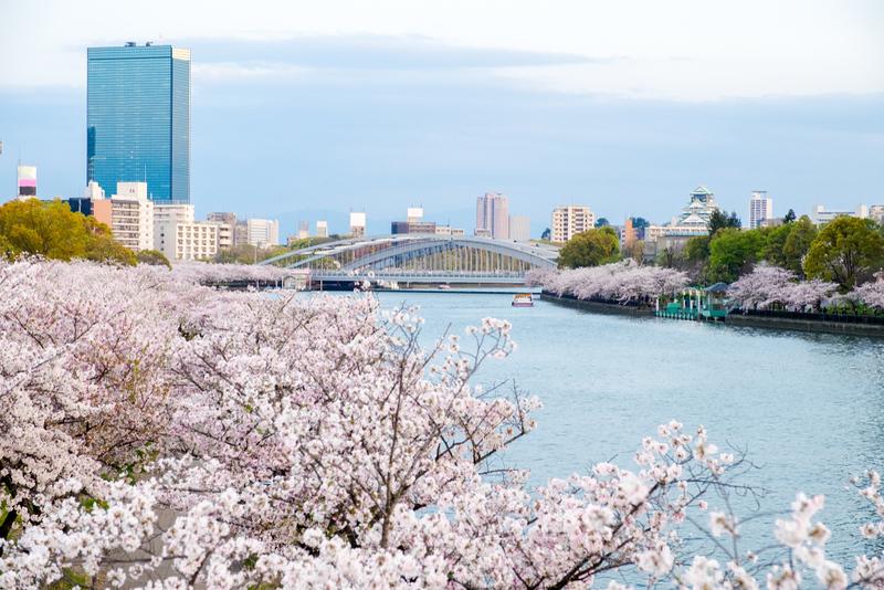 Cherry blossoms in Sakuranomiya Park