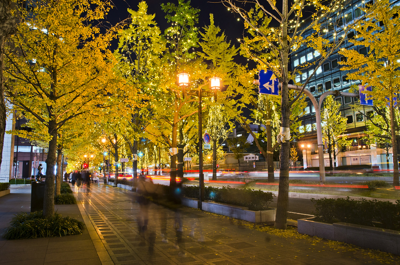Midosuji Boulevard in fall foliage season