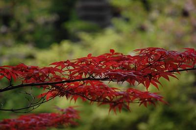 Gokuraku-jodo Garden