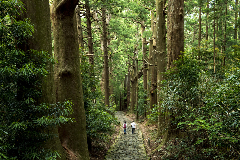 Kumano Kodo pilgrimage route. Editorial credit: Basico / Shutterstock.com