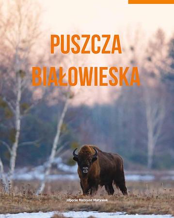 Puszcza Białowieska, wszyta wkładka do miesięcznika Eko i My 10/2017 Zdjęcia żubrów i wiele innych przyrodniczych ilustrują treść artykułów popularno-naukowych październik 2017