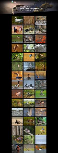 """Komplet fotografii wystawy """"Ptaki rzadkie i ginące"""" 2015"""