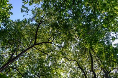 Canopy at Hovedøya