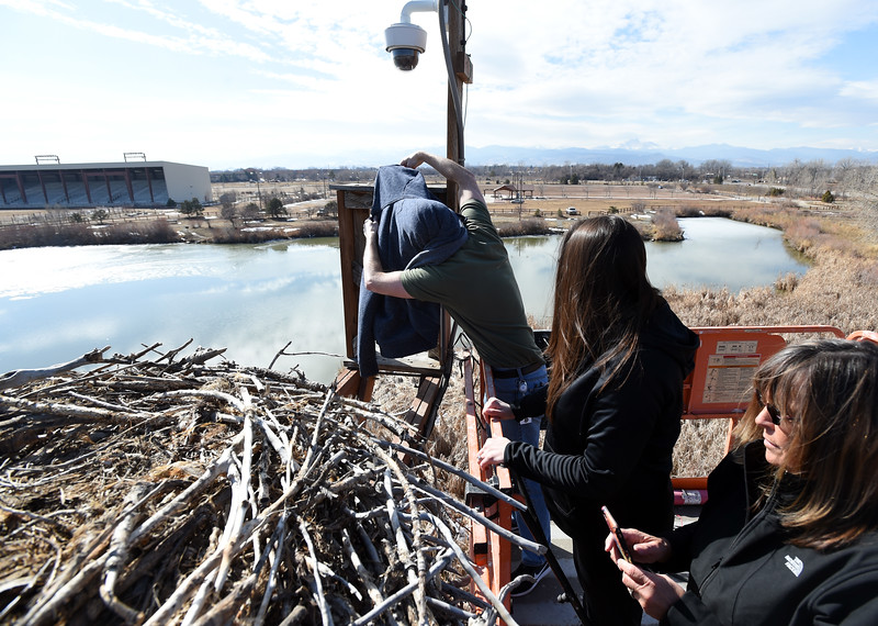 Osprey Nest Camera in Longmont