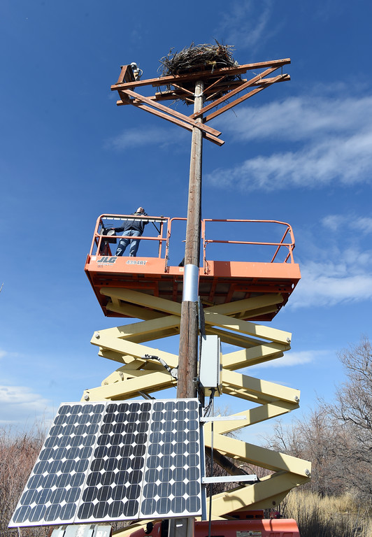 . Nik Brockman gets the lift in position to go up to the osprey nest. Nik Brockman, of Boulder County Parks and Open Space, replaces an infrared light at the osprey nest at the Boulder County Fairgrounds in Longmont. The light allows people to see the birds at night from the mounted camera.  Cliff Grassmick / Staff Photographer/ March 1, 2018
