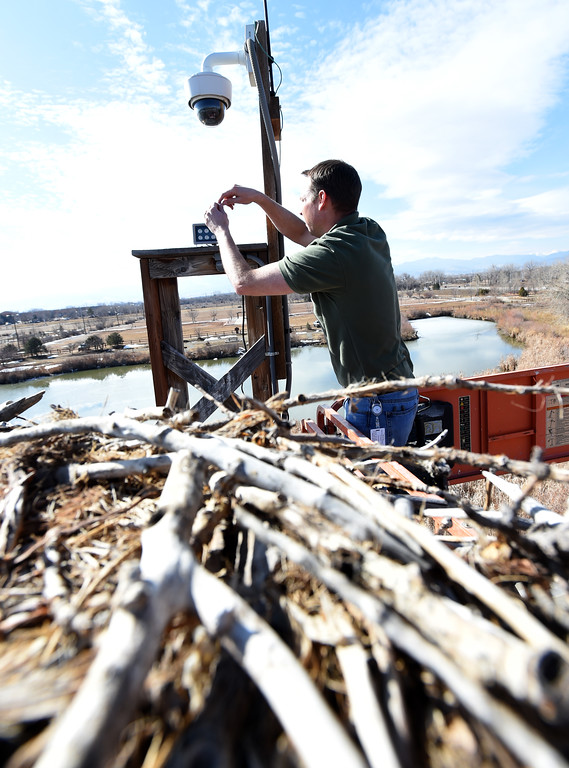 . Nik Brockman, of Boulder County Parks and Open Space, replaces an infrared light at the osprey nest at the Boulder County Fairgrounds in Longmont. The light allows people to see the birds at night from the mounted camera.  Cliff Grassmick / Staff Photographer/ March 1, 2018