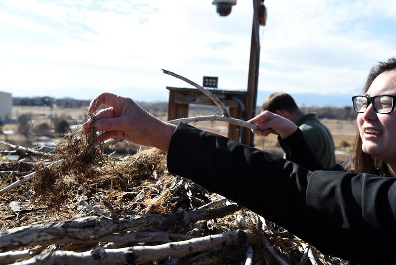 Osprey Nest Camera in Longmont