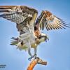 ospreymama2001