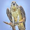 osprey711 1