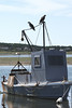 Young ospreys, Wellfleet Harbor  - 8/14/2010 - IMG_7455dK