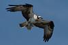 More nesting material - 7/3/2010  IMG_5072_dK