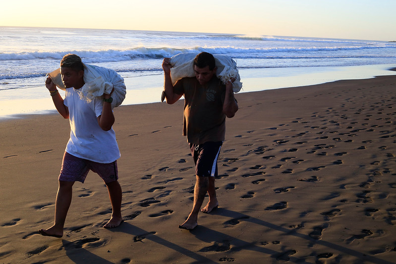 Two locals from ADIO carry full sacks of sea turtle eggs back to the warehouse for sorting and cleaning.