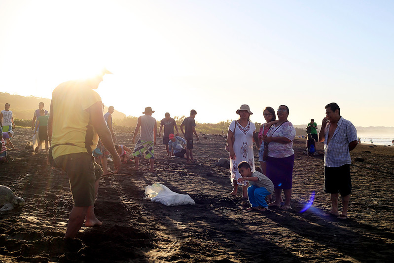 Locals gather eggs at an Olive Ridley sea turtle arribada, or arrival early in the morning at Playa Ostional, Costa Rica, late December.