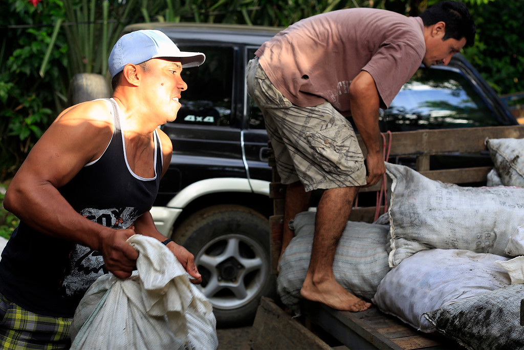 An ADIO worker throws heavy sacks of turtle eggs into the back of a pickup truck to bring back to the storehouse.