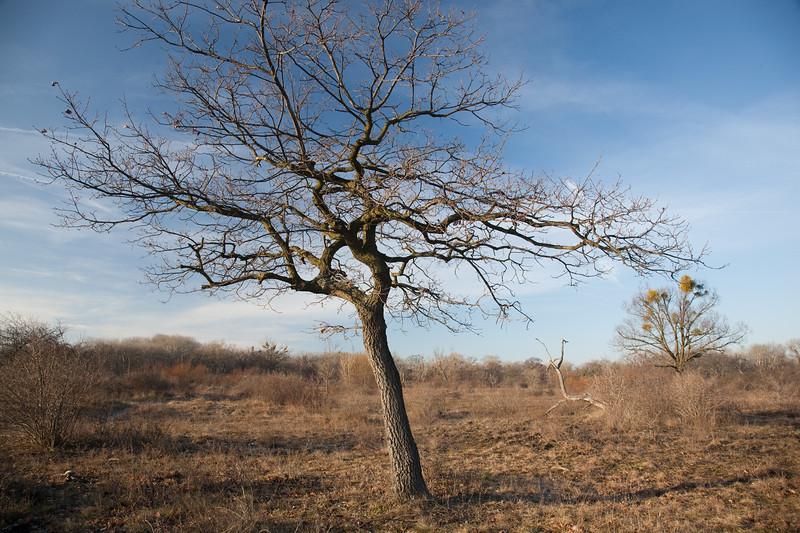 Strom na Kopáči