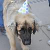 Happy Birthday Bear!!!