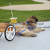 2012 Leonberger National Specialty : 9 galleries with 1572 photos