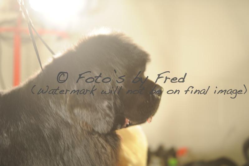 National Dog Specialties