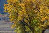 Lamar Fall Colors_N5A2033