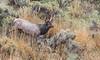 Mammoth AM Elk_N5A3345-Edit