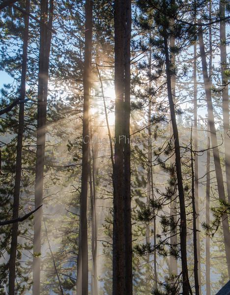 Yellowstone River Sunrise_N5A1551