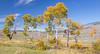 Hayden Valley Colors_N5A2162