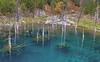 Quake Lake Pond and Creek_N5A2397-Edit