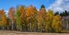 Tetons Fall 2014_N5A4096-Edit