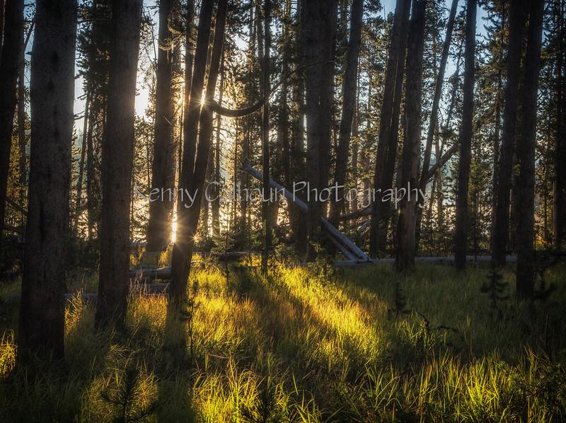 Yellowstone River Sunrise_N5A1392-Edit