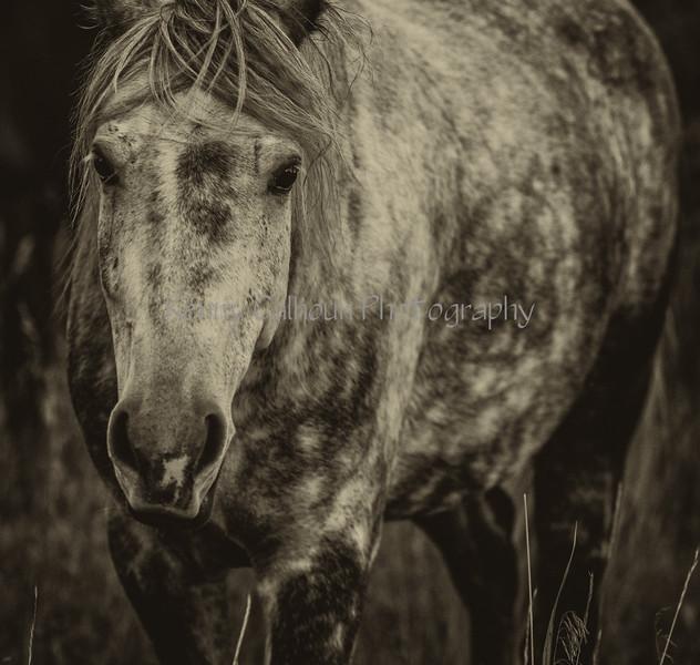 Madison River Grey Horse_N5A1271-Edit