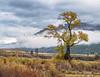 Hayden Valley_N5A3528-Edit-Edit-2