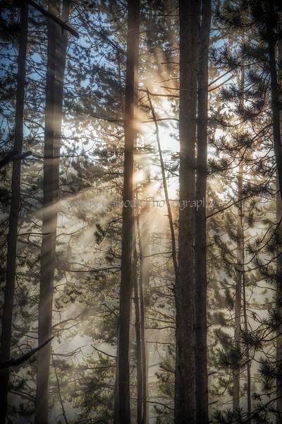 Yellowstone River Sunrise_N5A1577-Edit-2