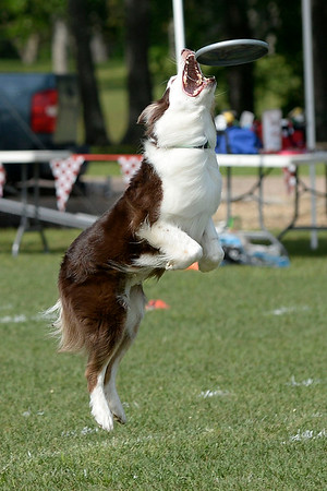 Frisbee Dogs