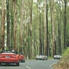 Tall timber - Chum Creek Road