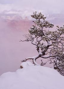 Bonsai Winter